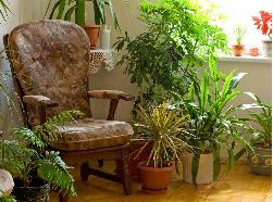 Những mẫu ghế sofa phù hợp với phong cách nội thất Indoor Garden