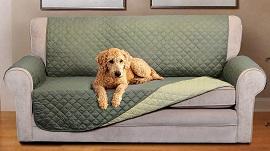 Học Ngay Mẹo Chọn Chất Liệu Ghế Sofa Dành Cho Những Hộ Gia Đình Nuôi Chó Mèo
